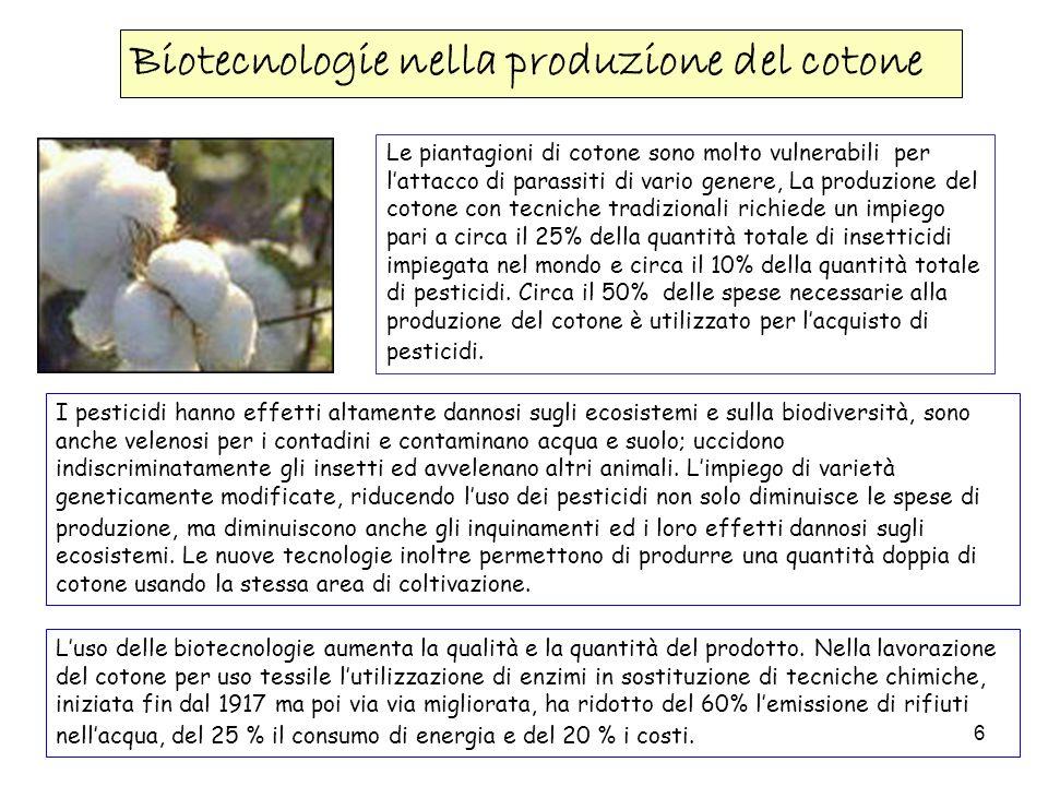 Biotecnologie nella produzione del cotone