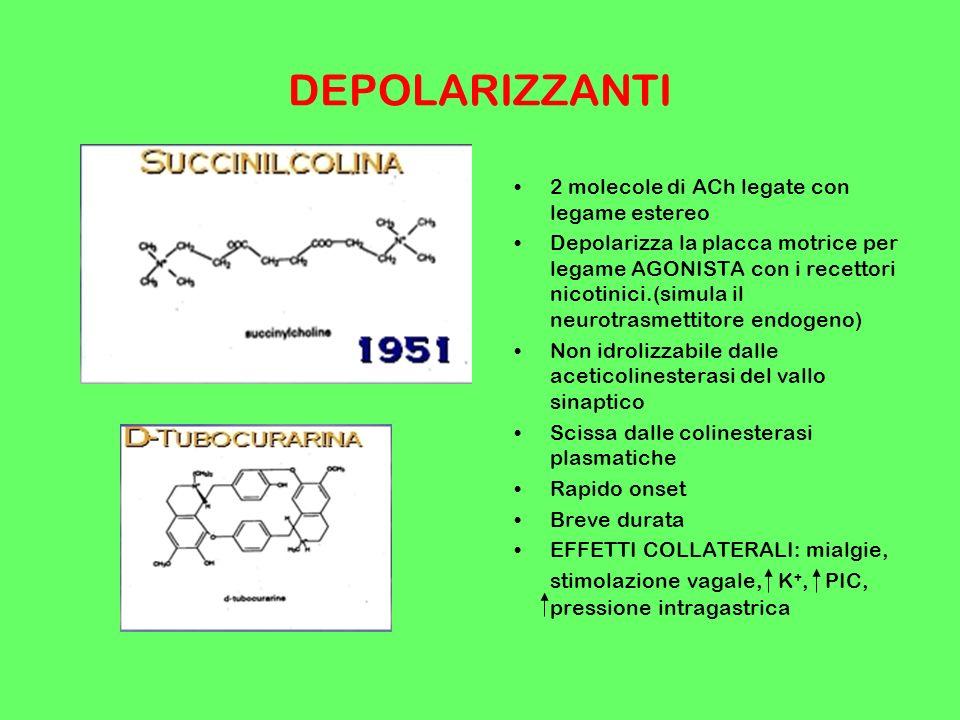 DEPOLARIZZANTI 2 molecole di ACh legate con legame estereo