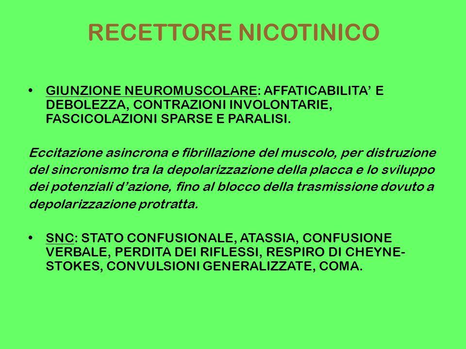 RECETTORE NICOTINICO GIUNZIONE NEUROMUSCOLARE: AFFATICABILITA' E DEBOLEZZA, CONTRAZIONI INVOLONTARIE, FASCICOLAZIONI SPARSE E PARALISI.