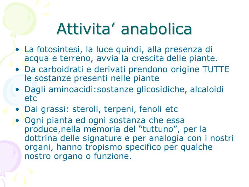 Attivita' anabolica La fotosintesi, la luce quindi, alla presenza di acqua e terreno, avvia la crescita delle piante.