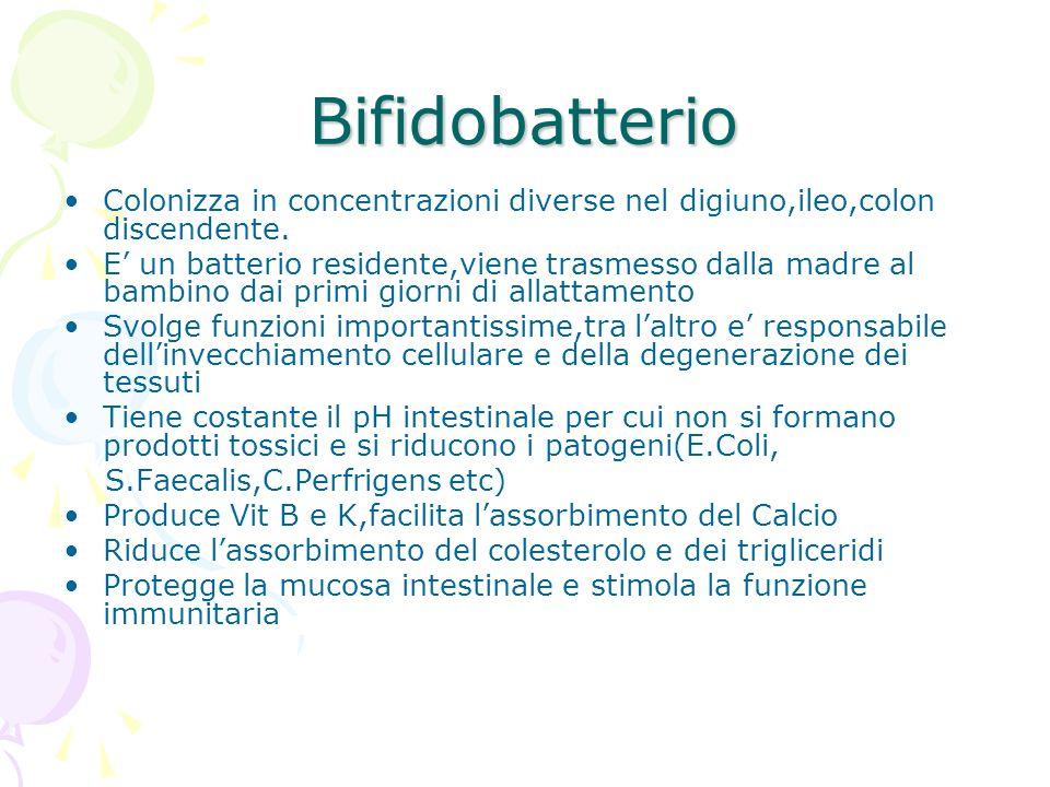 Bifidobatterio Colonizza in concentrazioni diverse nel digiuno,ileo,colon discendente.
