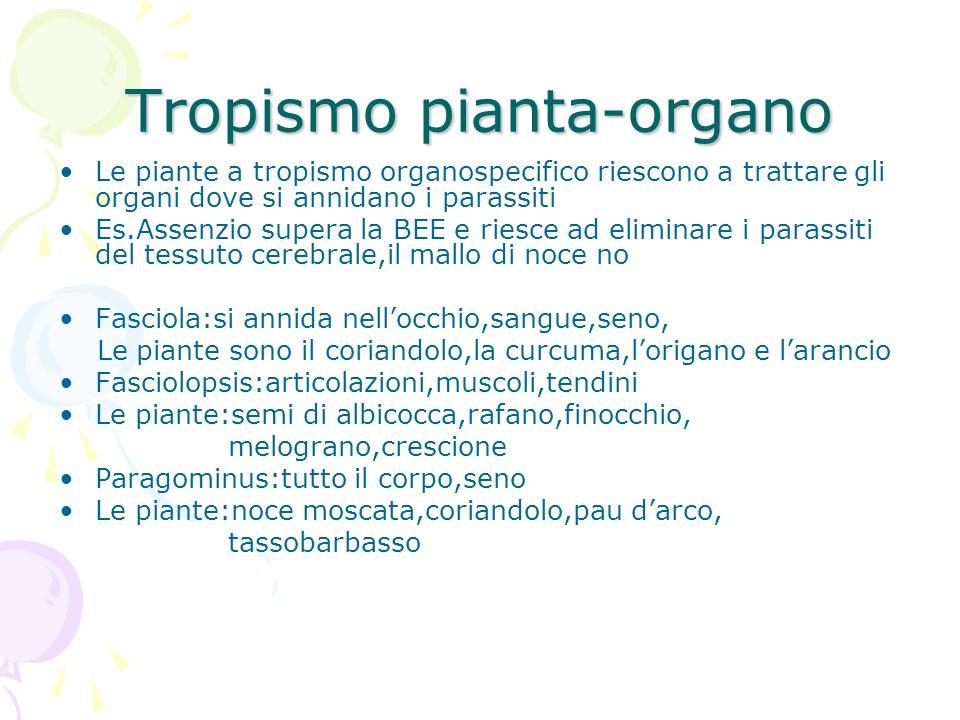 Tropismo pianta-organo
