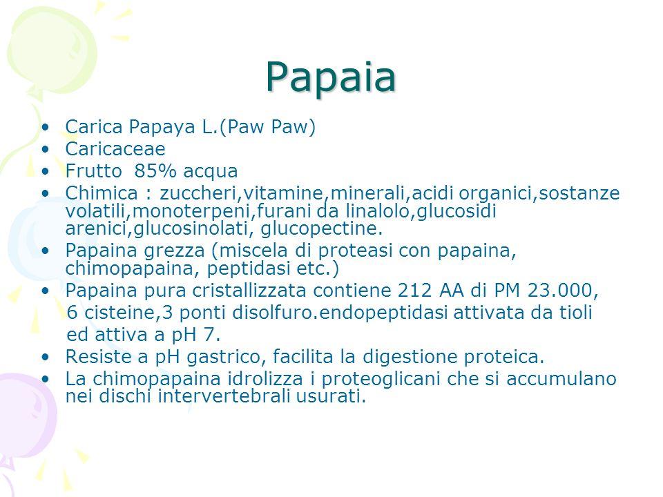Papaia Carica Papaya L.(Paw Paw) Caricaceae Frutto 85% acqua