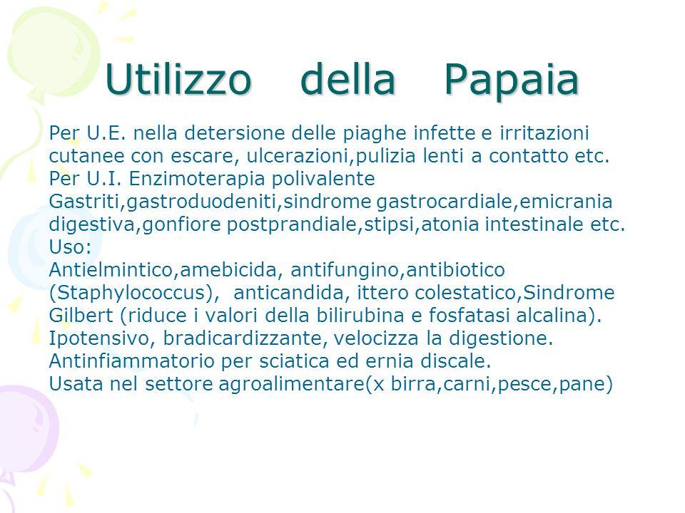 Utilizzo della Papaia Per U.E. nella detersione delle piaghe infette e irritazioni.
