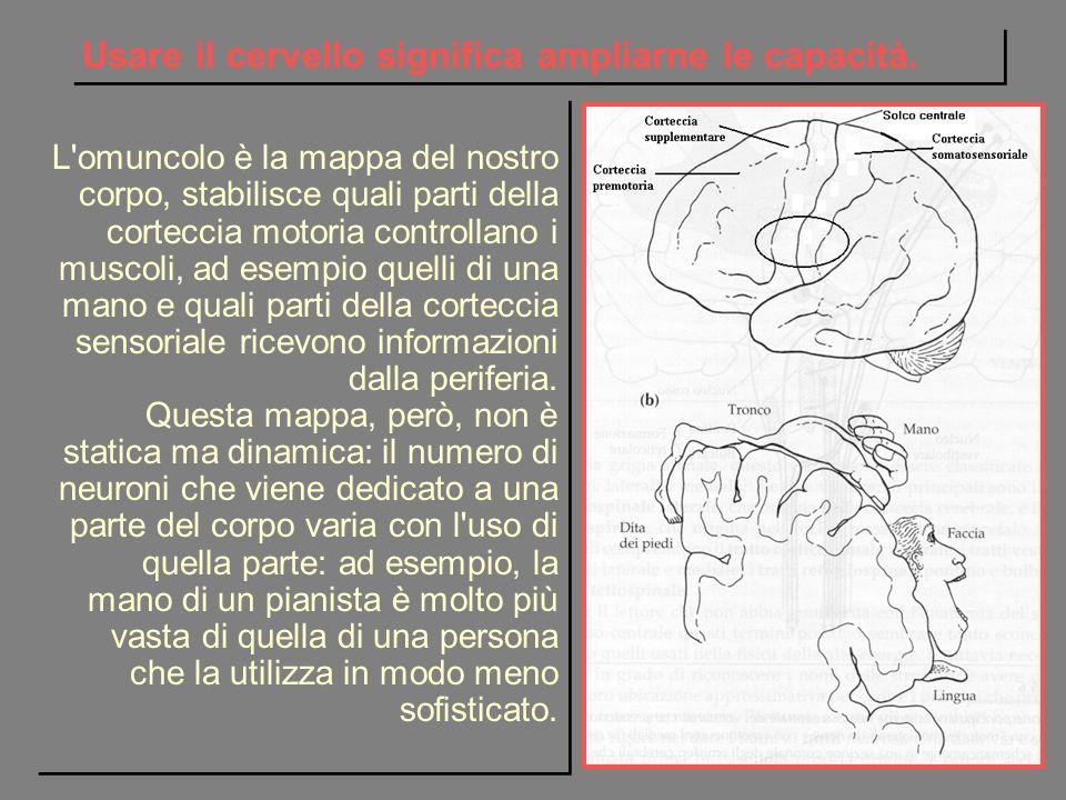 Usare il cervello significa ampliarne le capacità.