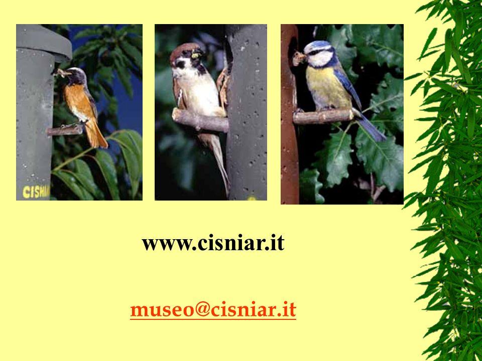 www.cisniar.it museo@cisniar.it