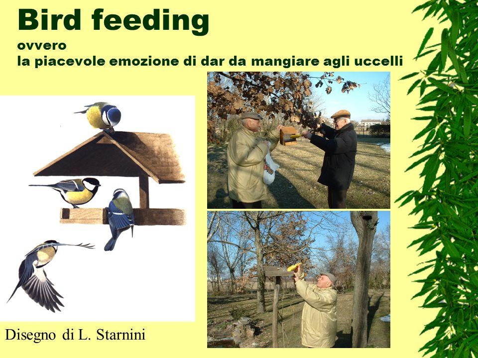 Bird feeding ovvero la piacevole emozione di dar da mangiare agli uccelli