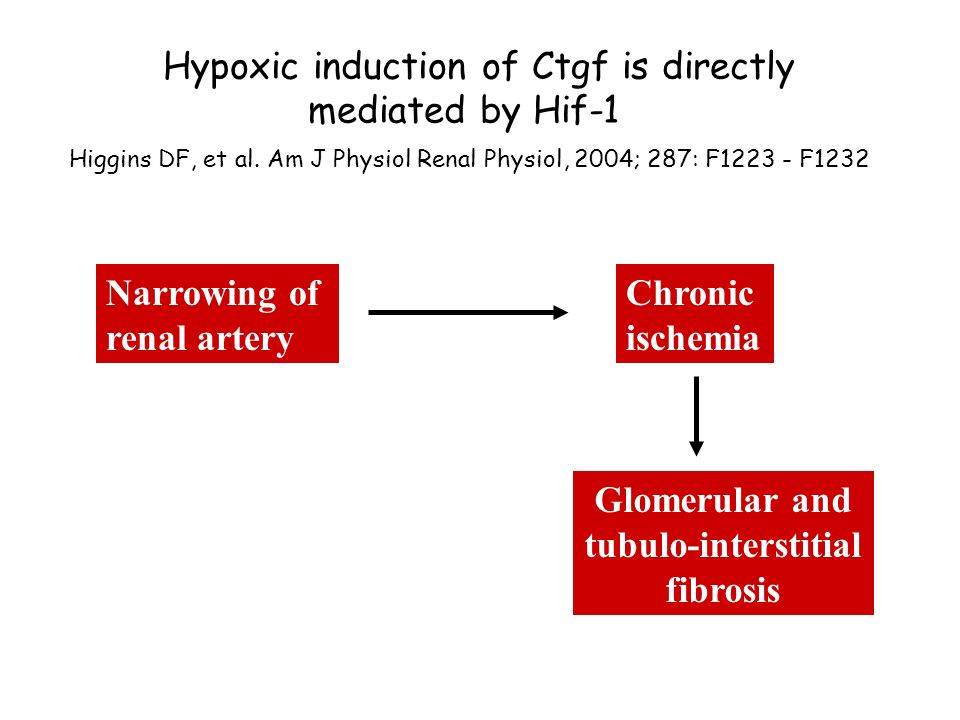Hypoxic induction of Ctgf is directly mediated by Hif-1 Higgins DF, et al. Am J Physiol Renal Physiol, 2004; 287: F1223 - F1232