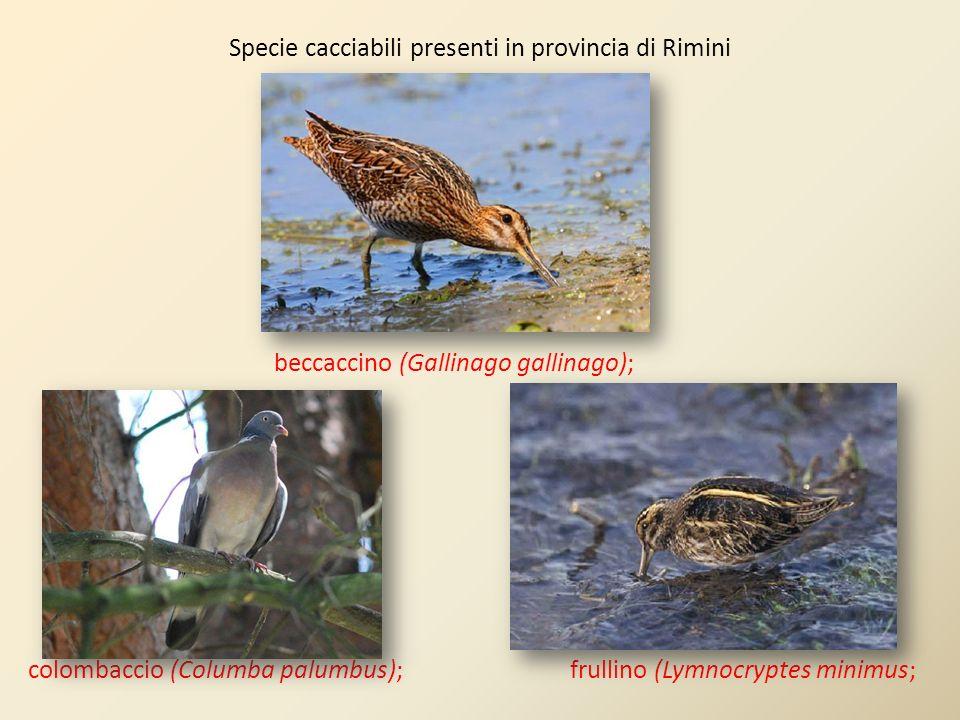 Specie cacciabili presenti in provincia di Rimini