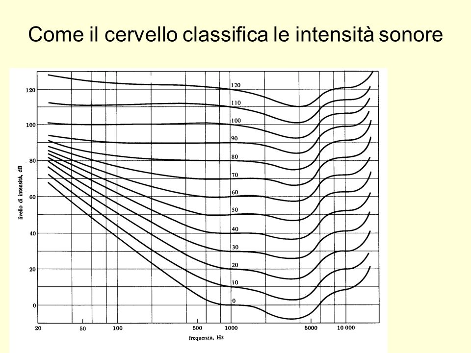 Come il cervello classifica le intensità sonore