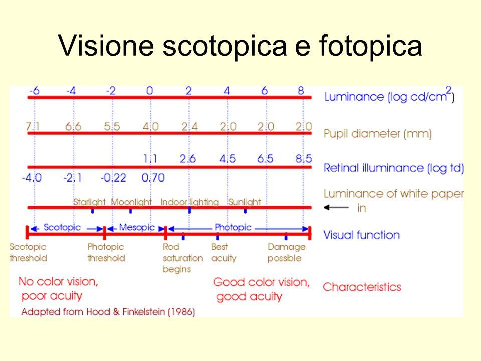 Visione scotopica e fotopica