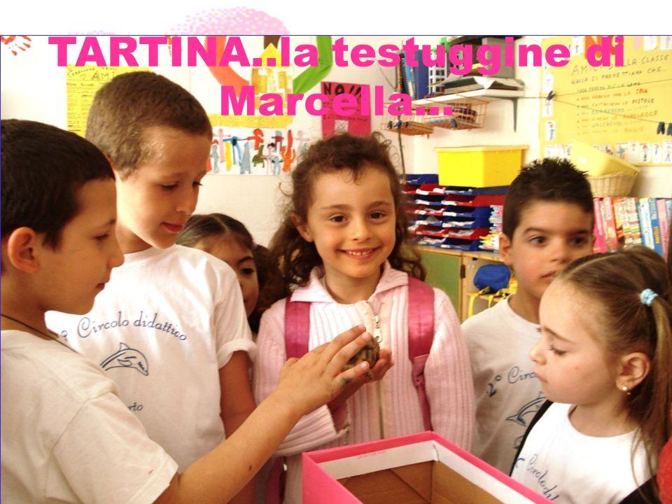 TARTINA, LA TESTUGGINE DI MARCELLA