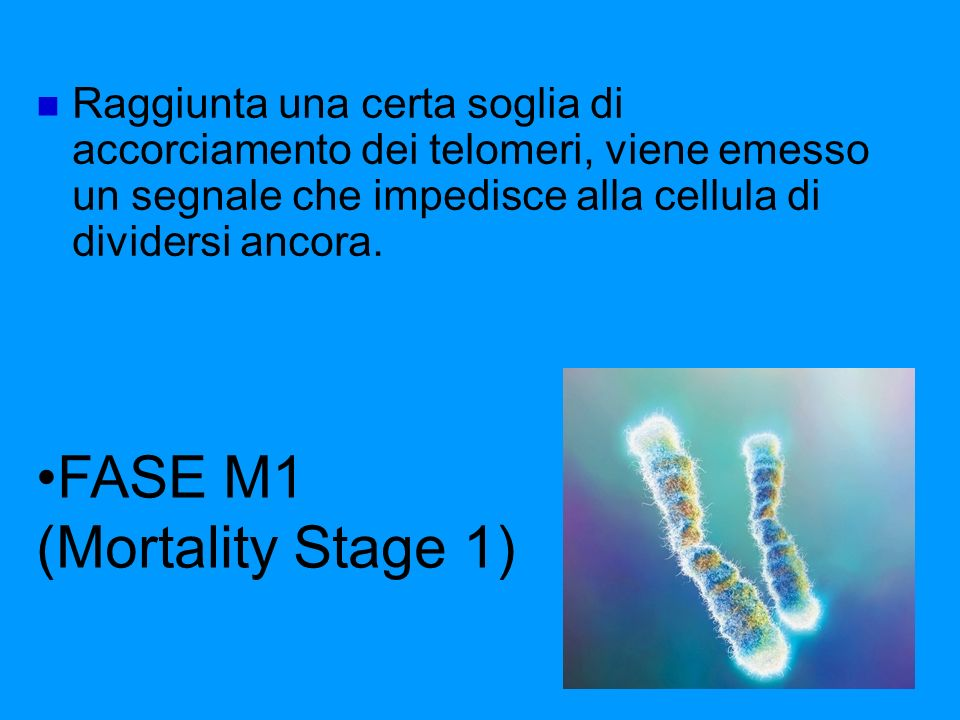 FASE M1 (Mortality Stage 1)