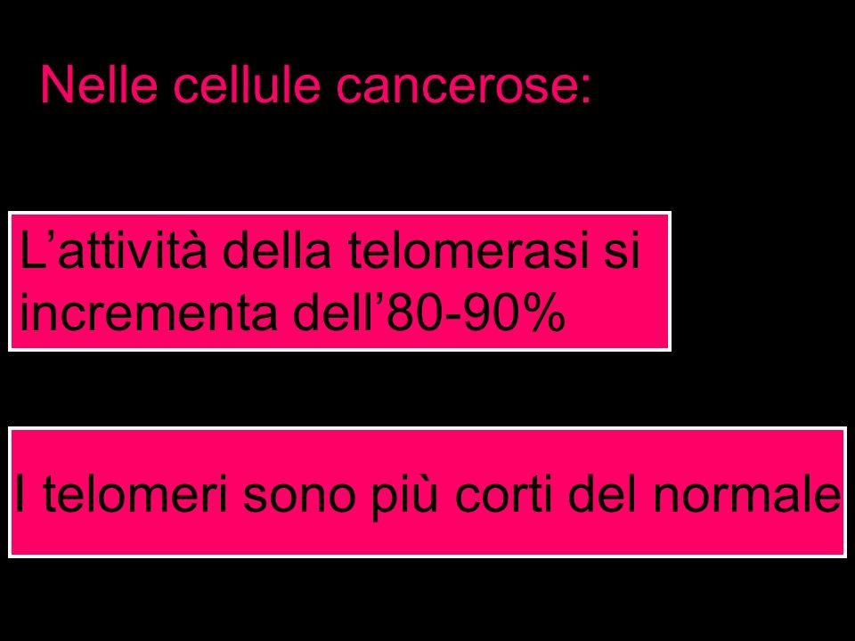 I telomeri sono più corti del normale