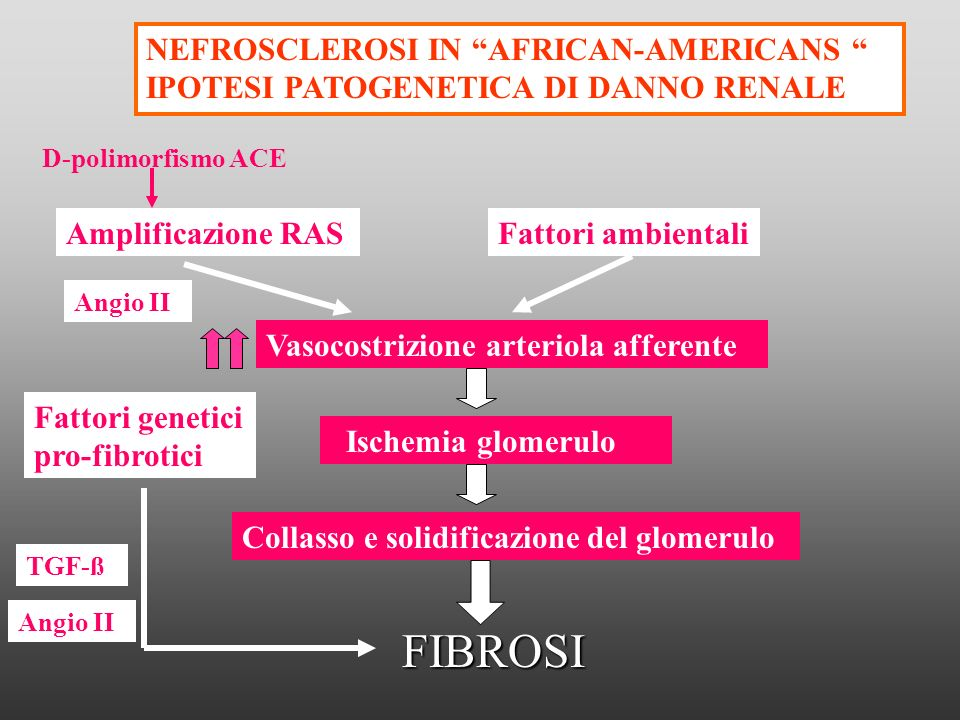 NEFROSCLEROSI IN AFRICAN-AMERICANS IPOTESI PATOGENETICA DI DANNO RENALE