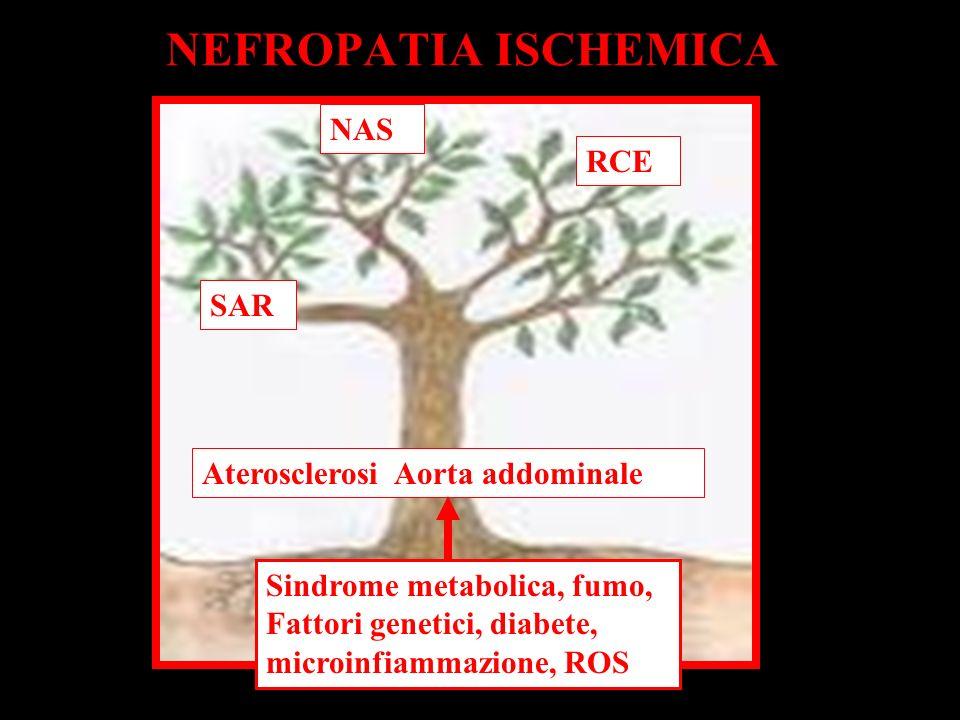 NEFROPATIA ISCHEMICA NAS RCE SAR Aterosclerosi Aorta addominale