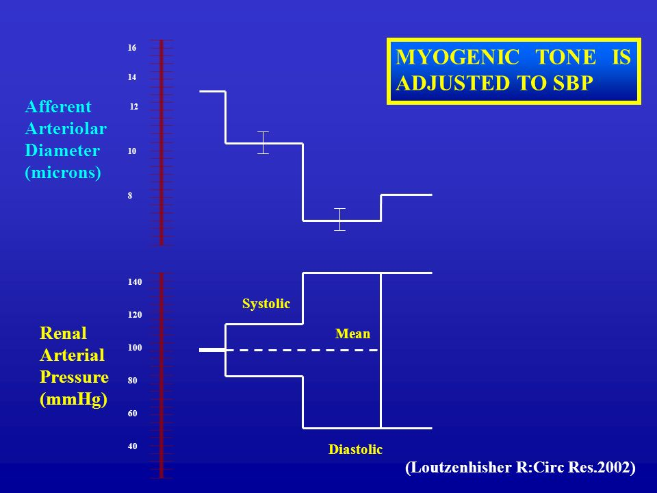 MYOGENIC TONE IS ADJUSTED TO SBP