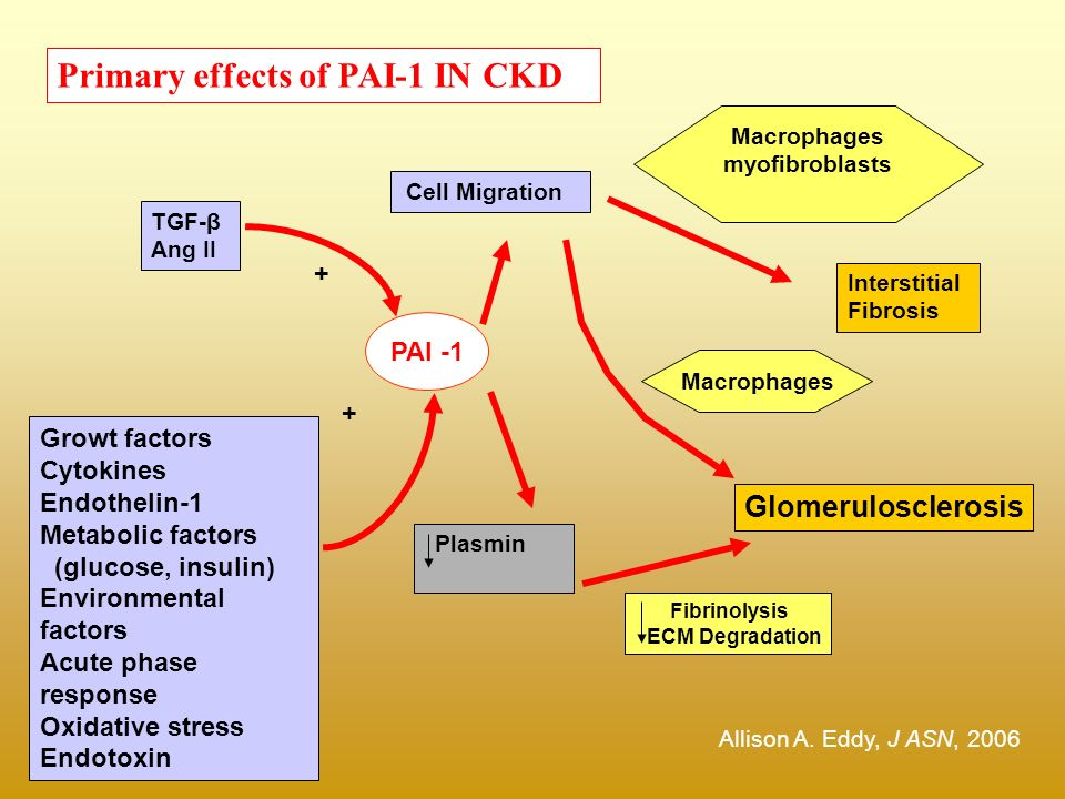 Primary effects of PAI-1 IN CKD