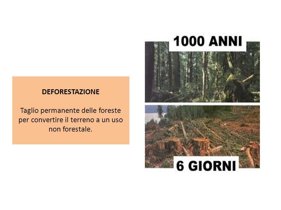 DEFORESTAZIONE Taglio permanente delle foreste per convertire il terreno a un uso non forestale.