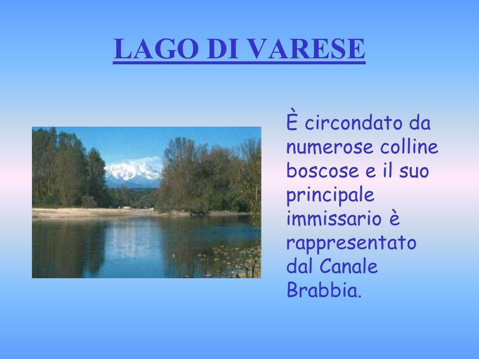 LAGO DI VARESE È circondato da numerose colline boscose e il suo principale immissario è rappresentato dal Canale Brabbia.