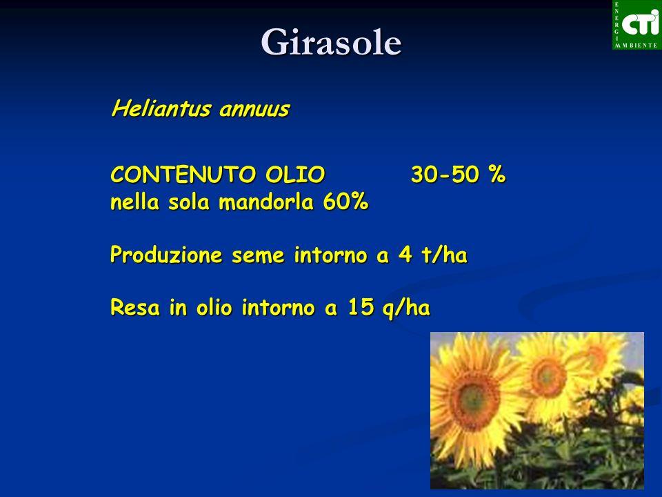 Girasole Heliantus annuus CONTENUTO OLIO 30-50 %