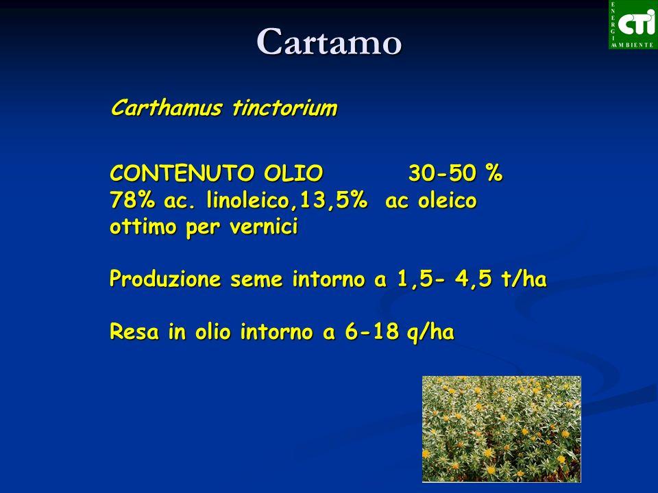 Cartamo Carthamus tinctorium CONTENUTO OLIO 30-50 %