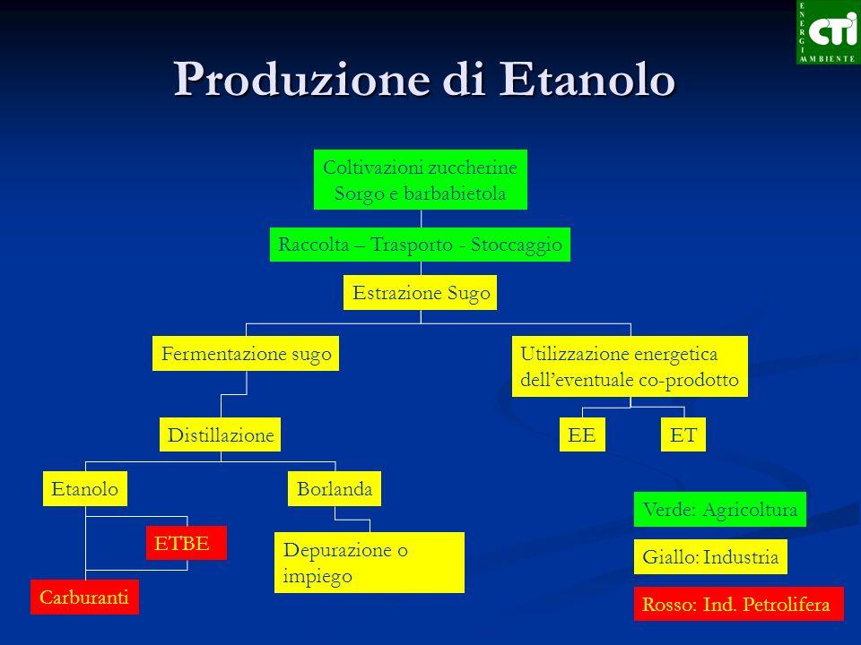 Produzione di Etanolo Coltivazioni zuccherine Sorgo e barbabietola