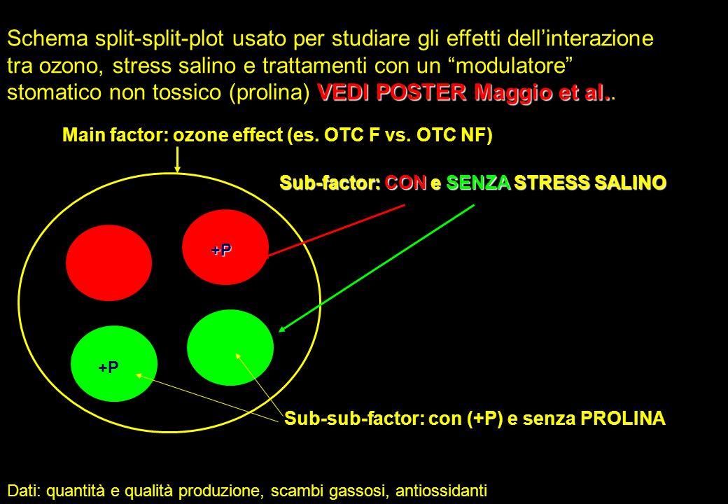 Schema split-split-plot usato per studiare gli effetti dell'interazione tra ozono, stress salino e trattamenti con un modulatore stomatico non tossico (prolina) VEDI POSTER Maggio et al..