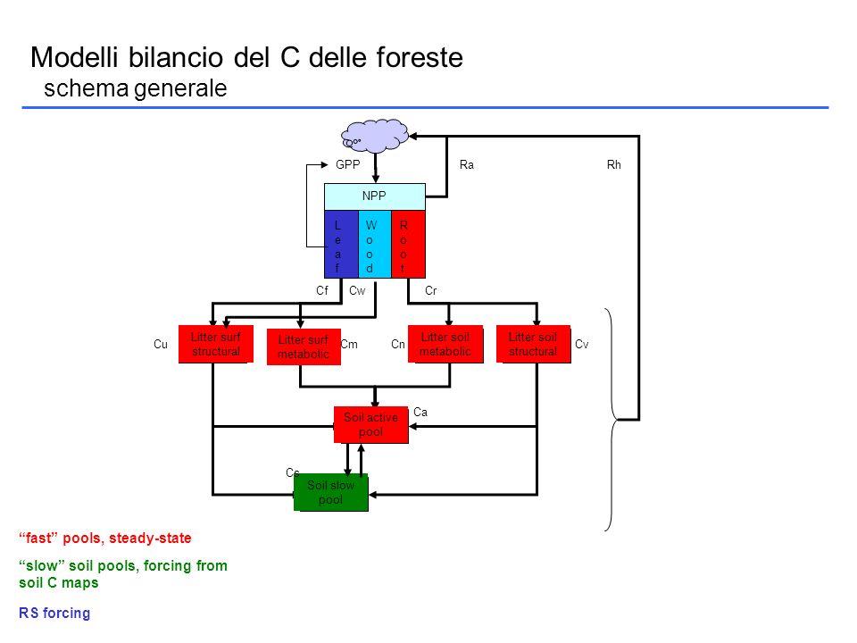 Modelli bilancio del C delle foreste