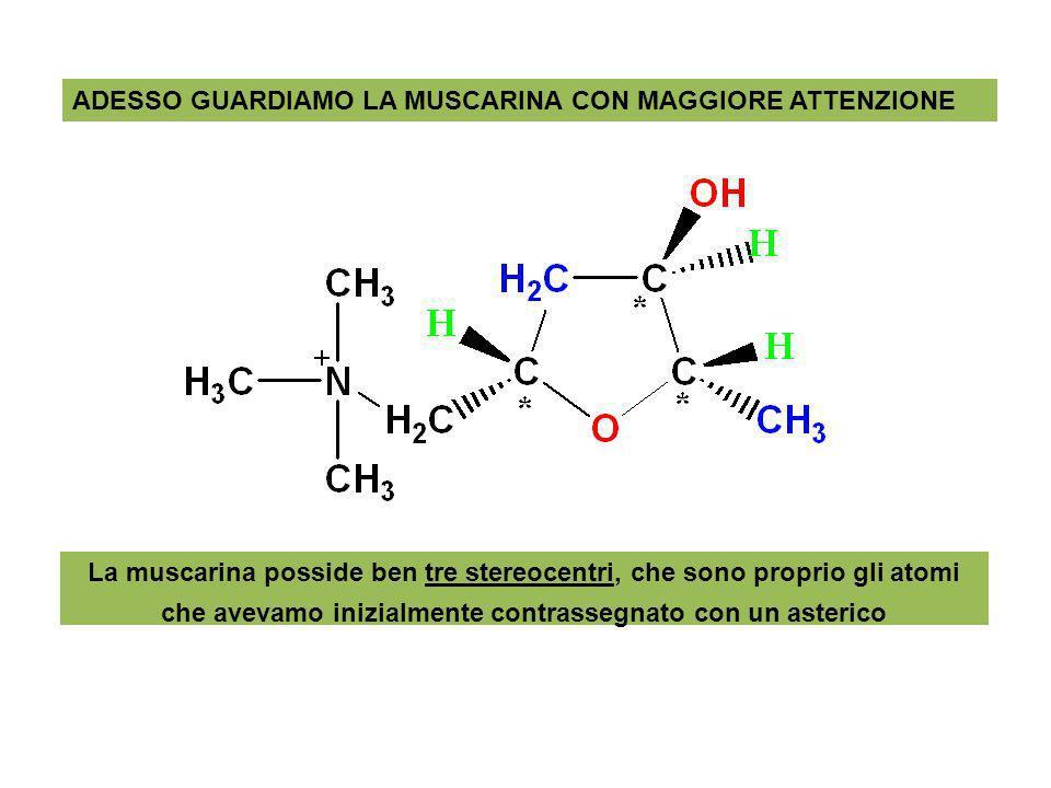 ADESSO GUARDIAMO LA MUSCARINA CON MAGGIORE ATTENZIONE