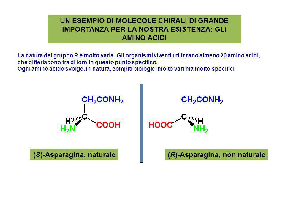 (S)-Asparagina, naturale (R)-Asparagina, non naturale