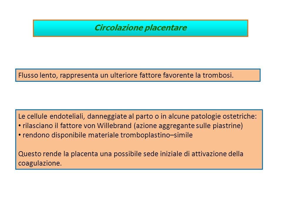 Circolazione placentare