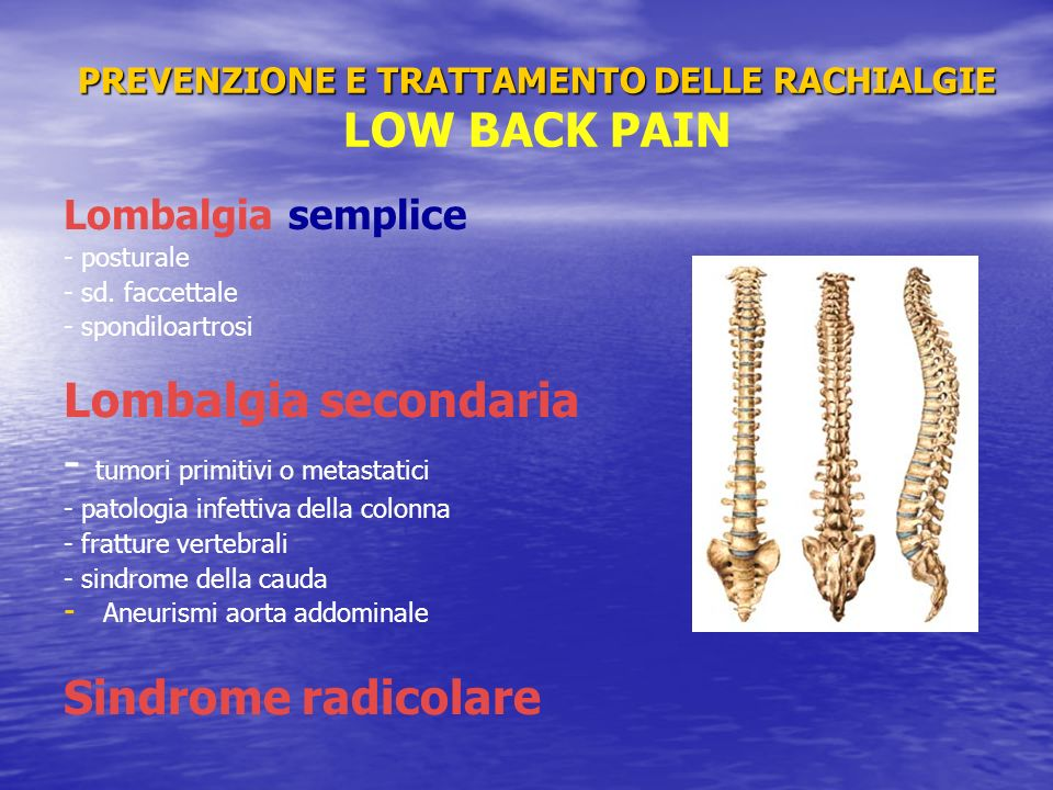 PREVENZIONE E TRATTAMENTO DELLE RACHIALGIE LOW BACK PAIN