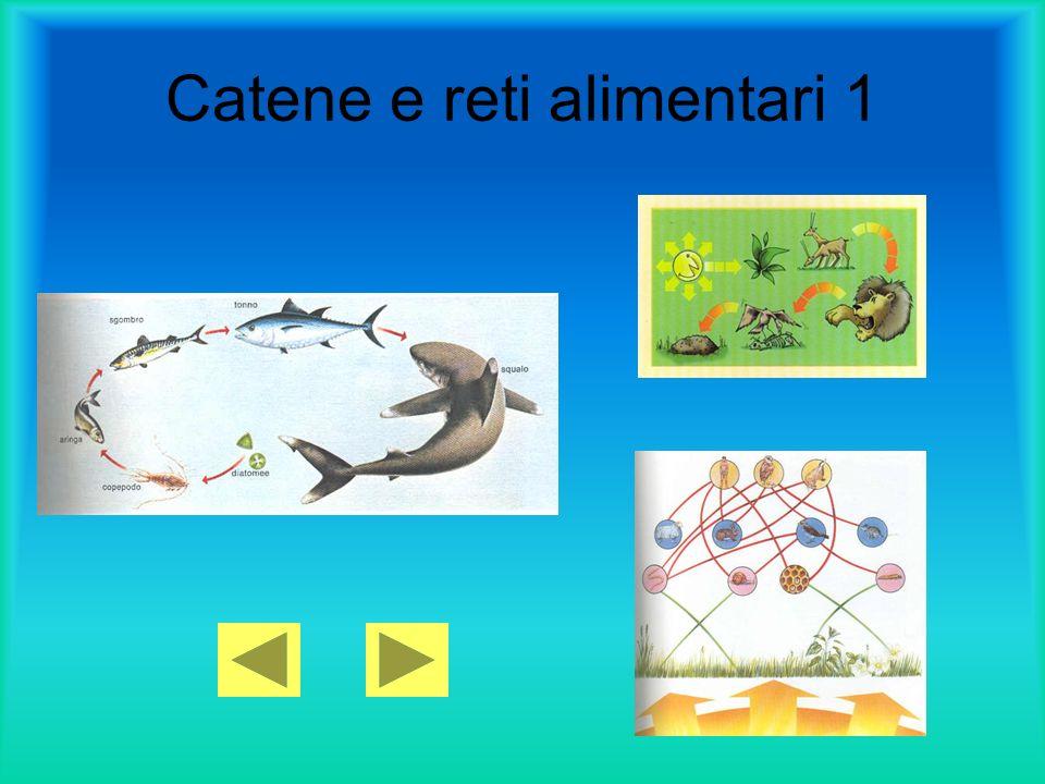 Catene e reti alimentari 1