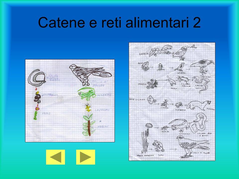 Catene e reti alimentari 2