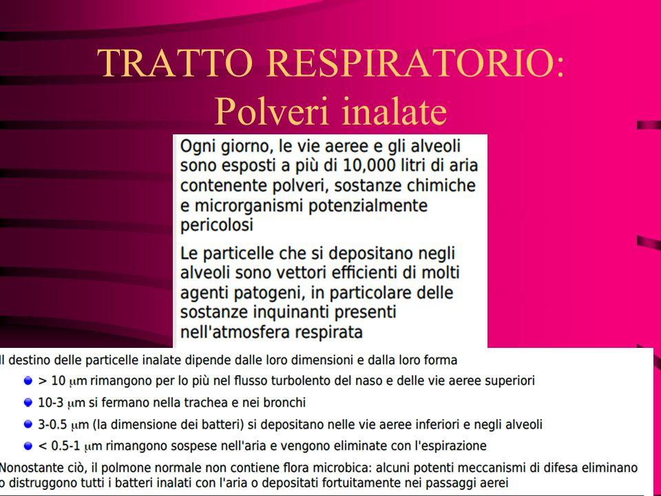 TRATTO RESPIRATORIO: Polveri inalate
