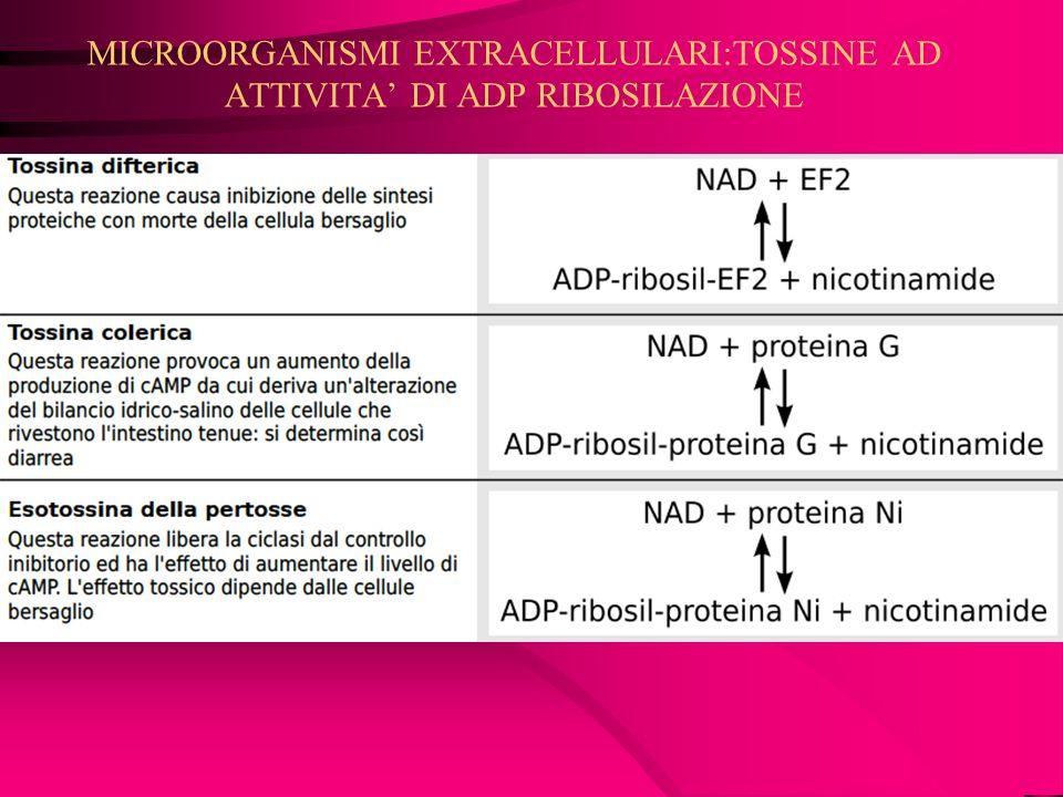 MICROORGANISMI EXTRACELLULARI:TOSSINE AD ATTIVITA' DI ADP RIBOSILAZIONE