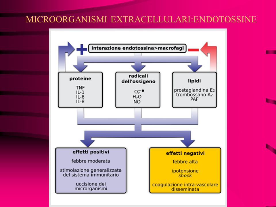 MICROORGANISMI EXTRACELLULARI:ENDOTOSSINE