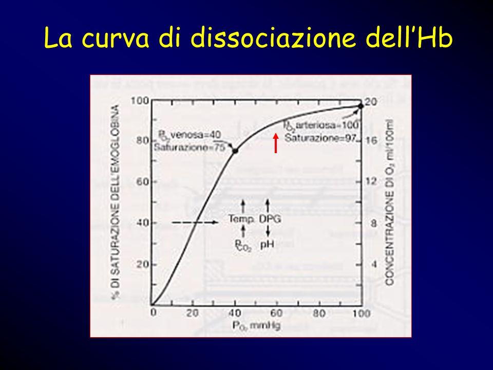 La curva di dissociazione dell'Hb