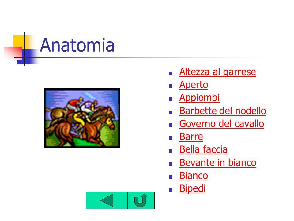 Anatomia Altezza al garrese Aperto Appiombi Barbette del nodello