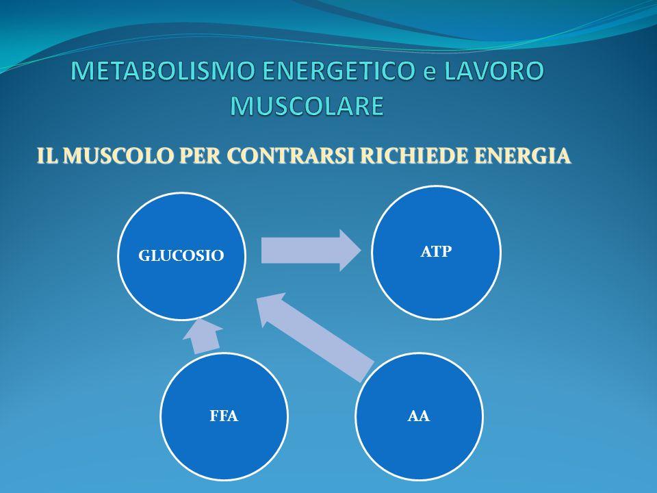 METABOLISMO ENERGETICO e LAVORO MUSCOLARE