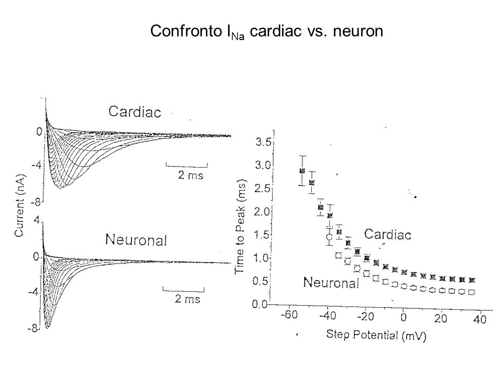 Confronto INa cardiac vs. neuron