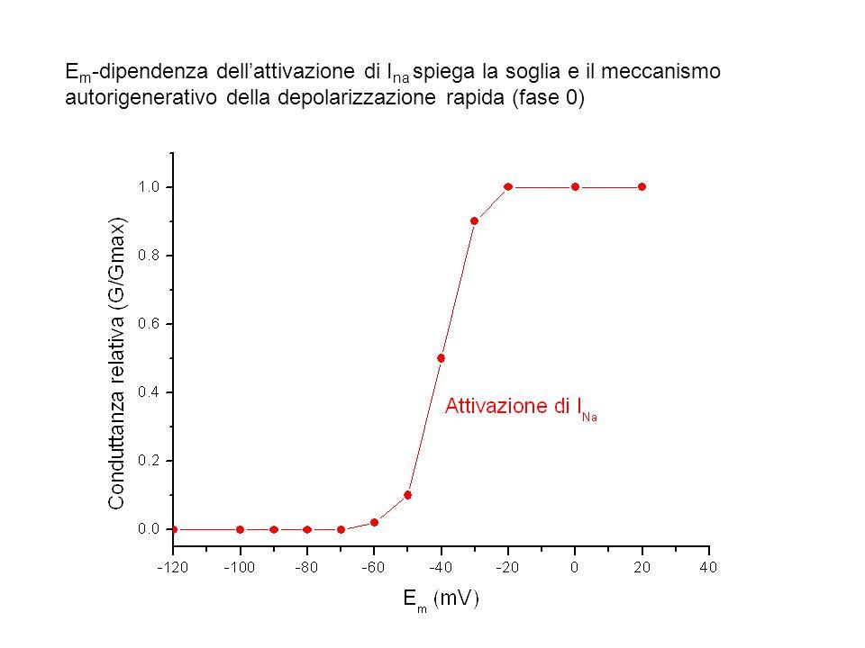 Em-dipendenza dell'attivazione di Ina spiega la soglia e il meccanismo autorigenerativo della depolarizzazione rapida (fase 0)