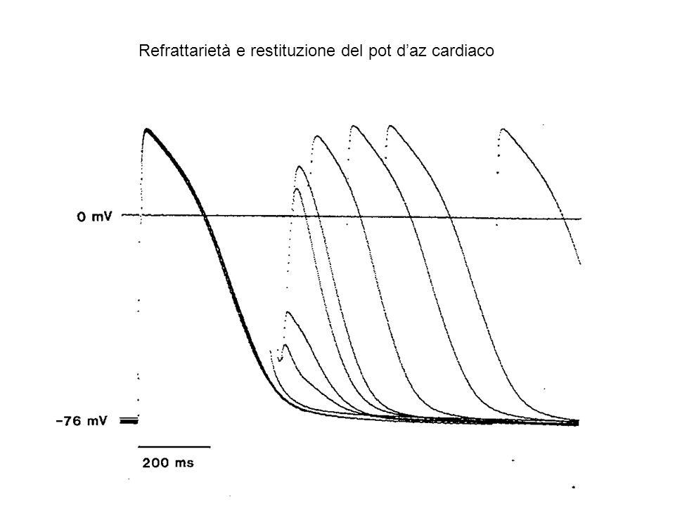 Refrattarietà e restituzione del pot d'az cardiaco