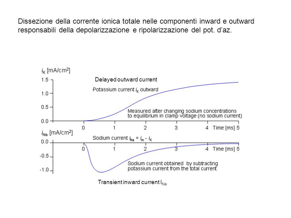 Dissezione della corrente ionica totale nelle componenti inward e outward responsabili della depolarizzazione e ripolarizzazione del pot. d'az.