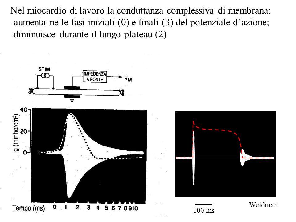 Nel miocardio di lavoro la conduttanza complessiva di membrana:
