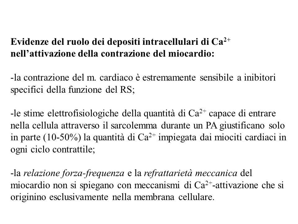 Evidenze del ruolo dei depositi intracellulari di Ca2+ nell'attivazione della contrazione del miocardio: