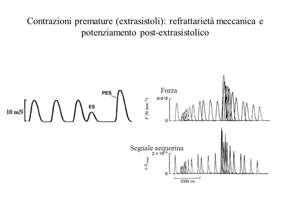 Contrazioni premature (extrasistoli): refrattarietà meccanica e potenziamento post-extrasistolico