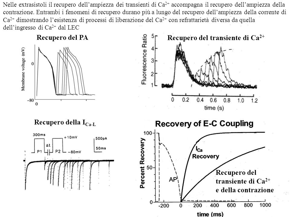 Recupero del transiente di Ca2+