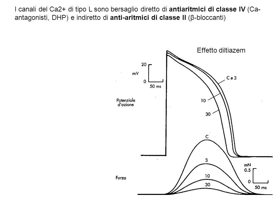 I canali del Ca2+ di tipo L sono bersaglio diretto di antiaritmici di classe IV (Ca-antagonisti, DHP) e indiretto di anti-aritmici di classe II (β-bloccanti)